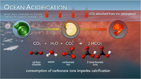 Ocean Acidification Illustrations